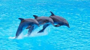 Sensor technology inspired by Bottlenose Dolphins