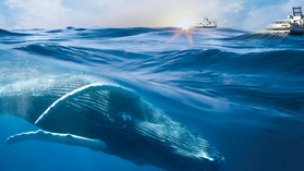 Sercel launches marine mammal detection solution to optimise seismic productivity